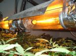 Grow Light Suggestiong for Hydroponics